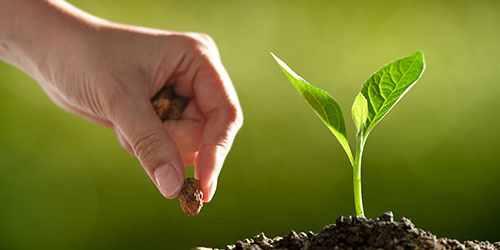Hand plantng seed with green plant